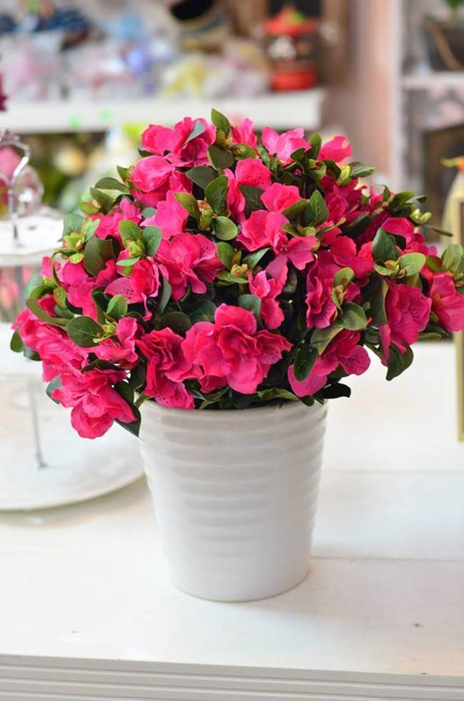 Những loại hoa vừa làm đẹp nhà vừa mang may mắn, tài lộc cho năm mới - Ảnh 2.