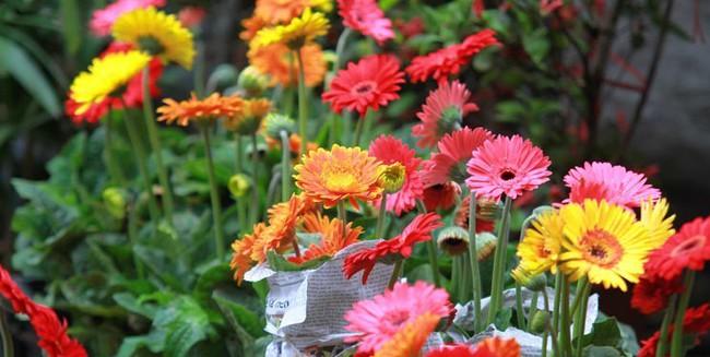 Những loại hoa vừa làm đẹp nhà vừa mang may mắn, tài lộc cho năm mới - Ảnh 6.