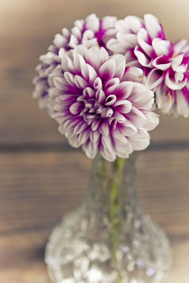 Những cách cắm hoa vừa dễ vừa đẹp trang trí nhà dịp Tết - Ảnh 11.