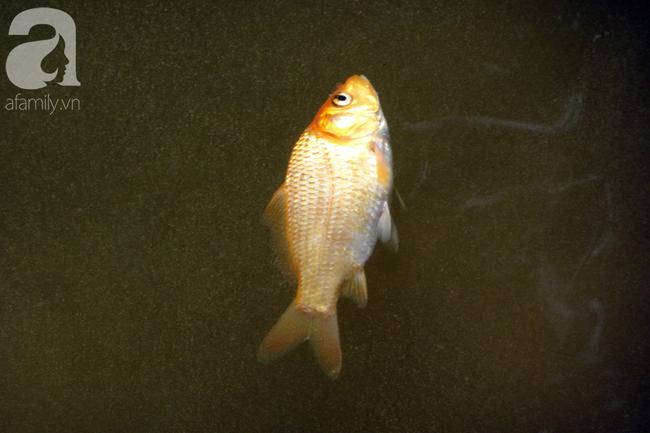 TP.HCM: Cá chép cúng ông Táo vừa thả xuống sông chưa kịp về trời đã bị chích điện, vớt lên bán lại - Ảnh 2.