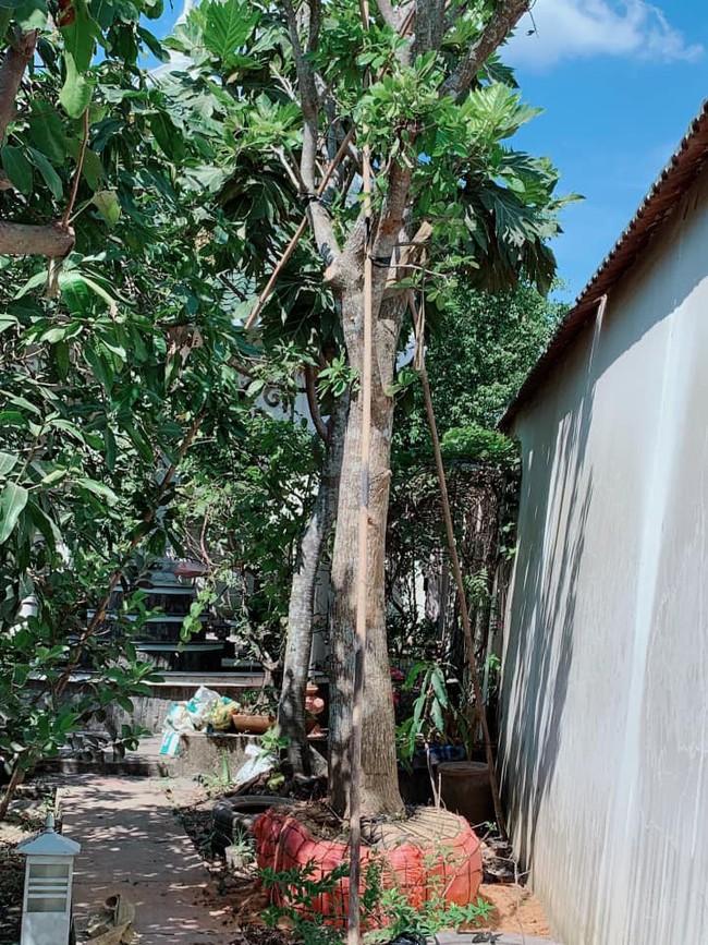 Nhà vườn bình yên và ngập tràn cây ăn quả của diễn viên Việt Trinh ở Bình Dương - Ảnh 11.