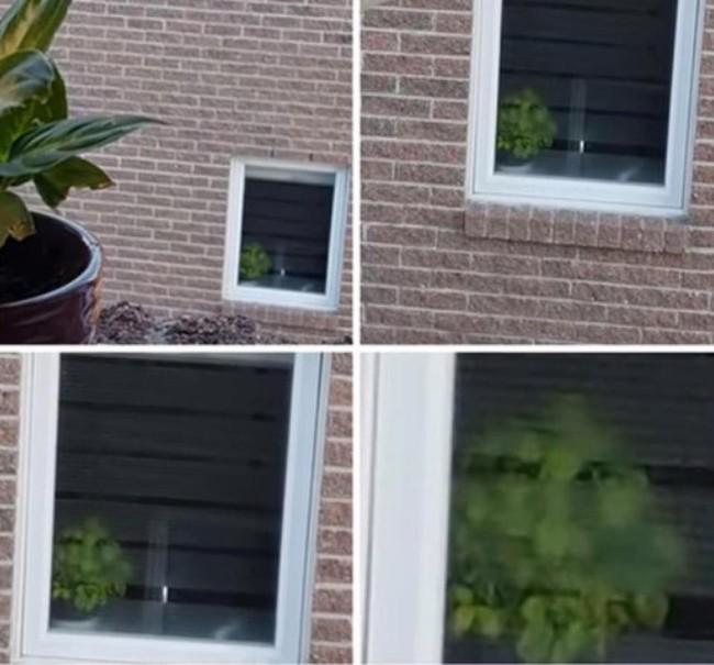 Nhìn kỹ những bức ảnh này xem, nếu ngó đâu cũng thấy khuôn mặt thì đích thị bạn đã mắc chứng ảo giác cực lạ - Ảnh 10.