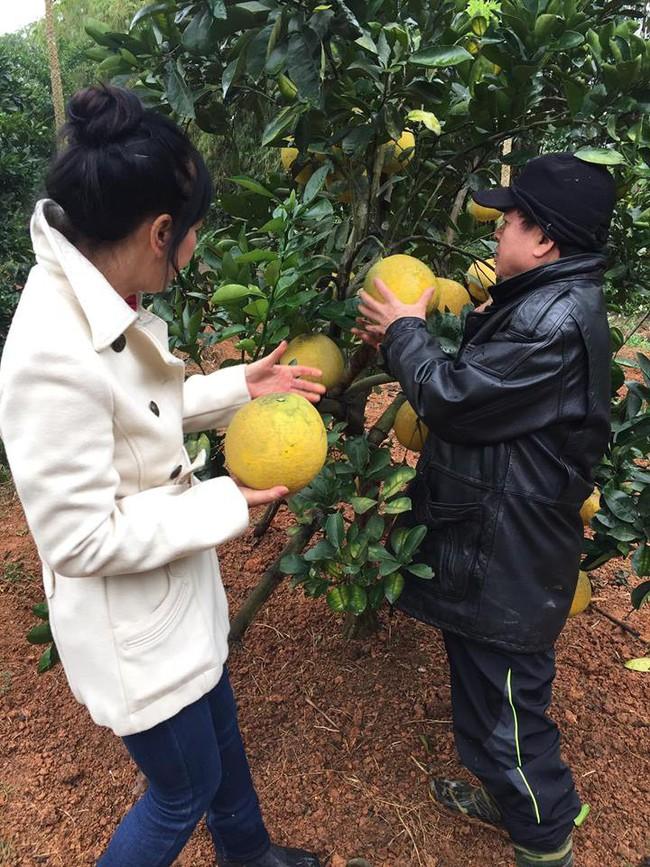 Sát Tết, NSƯT Chiều Xuân thu hoạch cả nghìn quả bưởi ở khu vườn của gia đình - Ảnh 9.