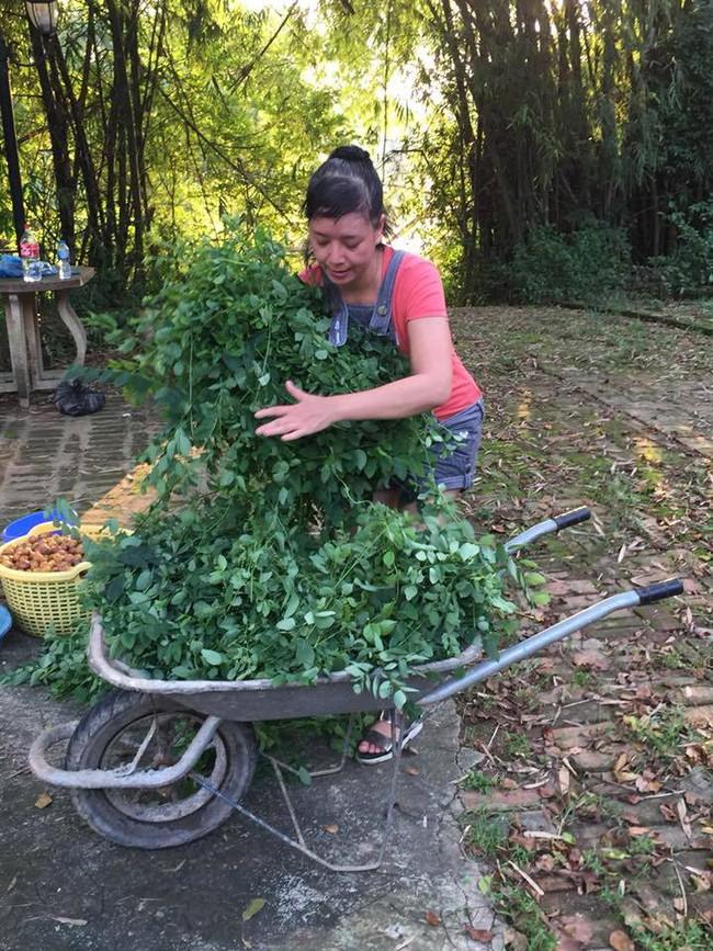 Sát Tết, NSƯT Chiều Xuân thu hoạch cả nghìn quả bưởi ở khu vườn của gia đình - Ảnh 22.
