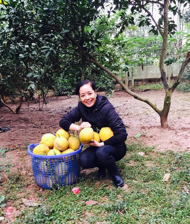 Sát Tết, NSƯT Chiều Xuân thu hoạch cả nghìn quả bưởi ở khu vườn của gia đình - Ảnh 5.