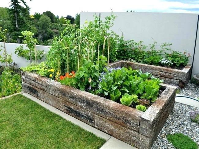 Vụ Thu - Đông sẽ không mất công sức và tiền bạc mua rau củ bên ngoài vì gia đình bạn đã có những bữa ăn tươi ngon nhất nhờ biết trồng các loại rau này trong vườn - Ảnh 5.