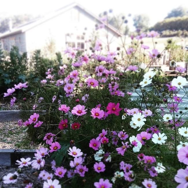 Gia đình 5 người quyết tâm không trở lại thành phố vì quá yêu thích cuộc sống nhà vườn ở nông thôn - Ảnh 16.