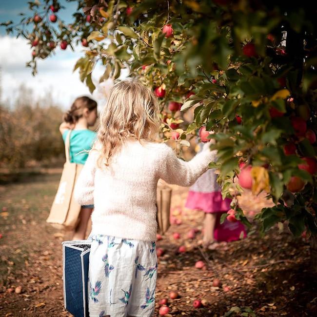 Gia đình 5 người quyết tâm không trở lại thành phố vì quá yêu thích cuộc sống nhà vườn ở nông thôn - Ảnh 15.