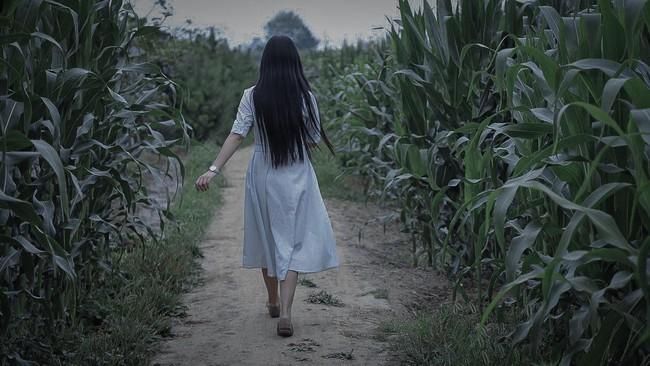 """Phát hiện ruộng ngô của mình hay bị trộm, ông chú nông dân tung """"chiêu độc"""" khiến kẻ gian tái mặt, khóc thét suốt đêm - Ảnh 2."""