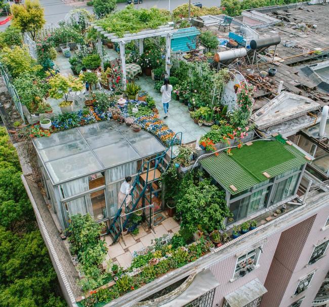 Tận dụng mái nhà bỏ hoang, người phụ nữ yêu hoa biến không gian thành khu vườn dịu dàng sắc hoa - Ảnh 1.