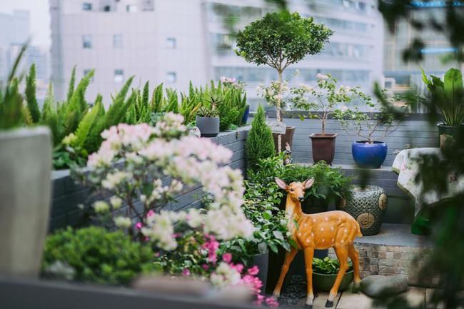 Tận dụng mái nhà bỏ hoang, người phụ nữ yêu hoa biến không gian thành khu vườn dịu dàng sắc hoa - Ảnh 5.