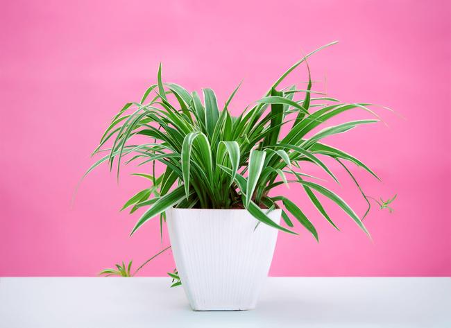 Gợi ý 8 loại cây cảnh nên mua về trồng ngay để giảm tác động ô nhiễm không khí - Ảnh 1.