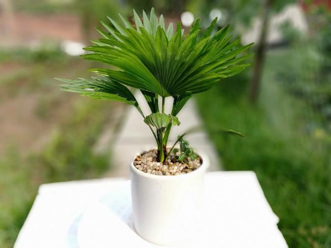 Gợi ý 8 loại cây cảnh nên mua về trồng ngay để giảm tác động ô nhiễm không khí - Ảnh 3.