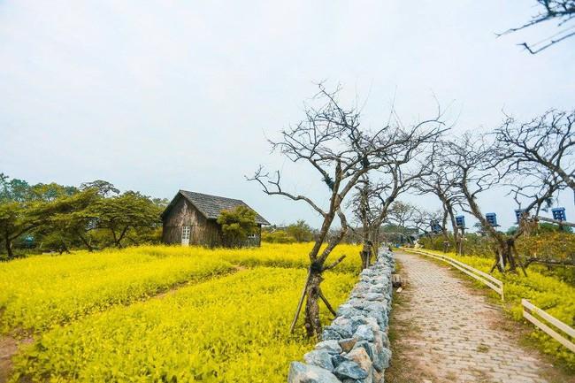 """Sự thật về thảo nguyên hoa với rừng lá phong đỏ cực """"ảo diệu"""", nơi đang hút các gia đình Hà Nội đổ xô đến chụp ảnh cuối tuần - Ảnh 2."""