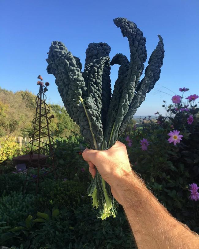 Người đàn ông tự trồng rau quả sạch trên mảnh vườn rộng 225m2 của gia đình ở ngoại ô - Ảnh 16.
