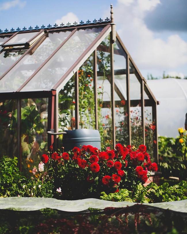 Người đàn ông tự trồng rau quả sạch trên mảnh vườn rộng 225m2 của gia đình ở ngoại ô - Ảnh 12.