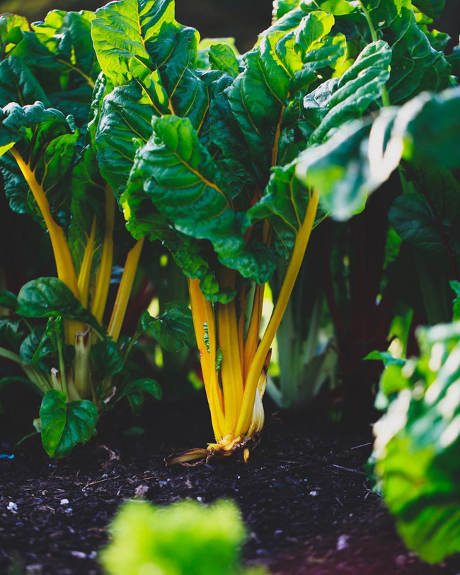 Người đàn ông tự trồng rau quả sạch trên mảnh vườn rộng 225m2 của gia đình ở ngoại ô - Ảnh 11.