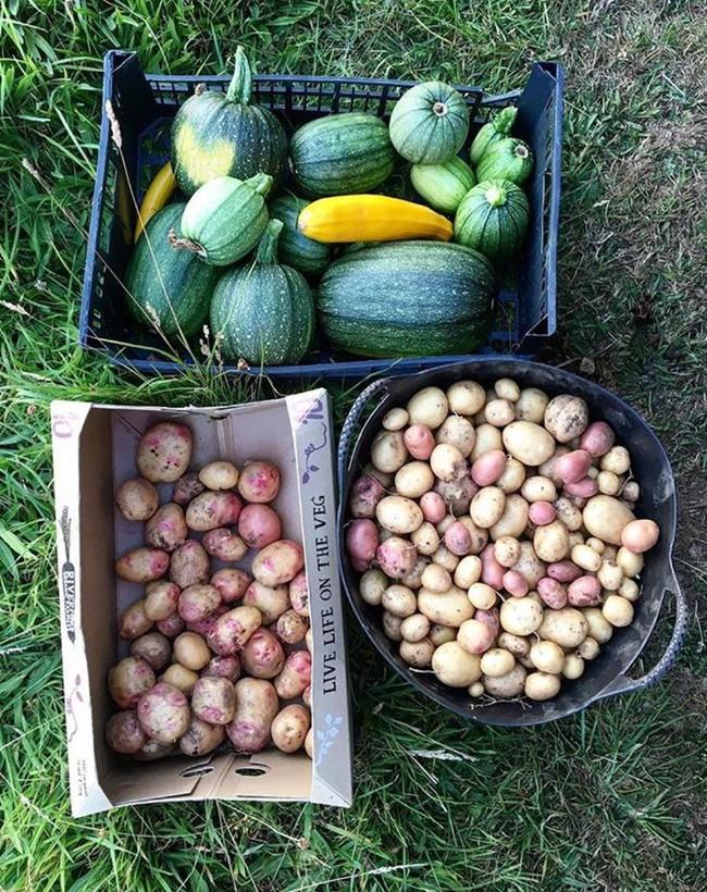 Người đàn ông tự trồng rau quả sạch trên mảnh vườn rộng 225m2 của gia đình ở ngoại ô - Ảnh 9.