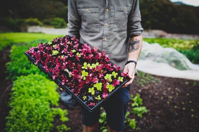 Người đàn ông tự trồng rau quả sạch trên mảnh vườn rộng 225m2 của gia đình ở ngoại ô - Ảnh 3.