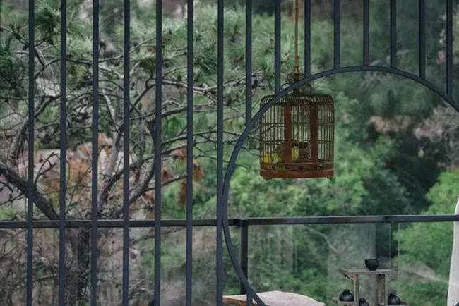Người phụ nữ dành cả phần còn lại của cuộc đời mình cho việc tạo không gian sống đẹp yên bình trên núi - Ảnh 8.