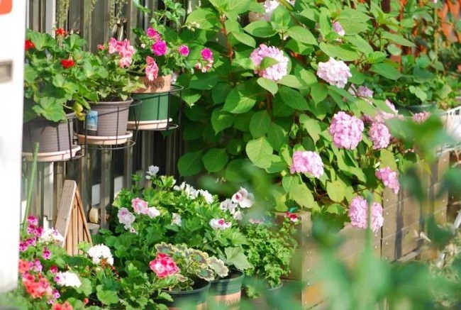 Biến sân thượng trống thành khu vườn đủ loại cây hoa đẹp như công viên, gia đình trẻ khiến nhiều người ghen tị - Ảnh 13.