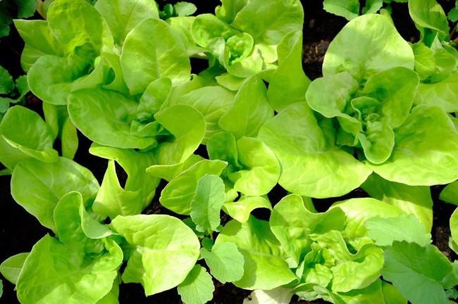 Anh chàng điển trai khiến hàng nghìn cô gái ngưỡng mộ khi trồng cả một sân thượng rau quả xanh tươi - Ảnh 18.