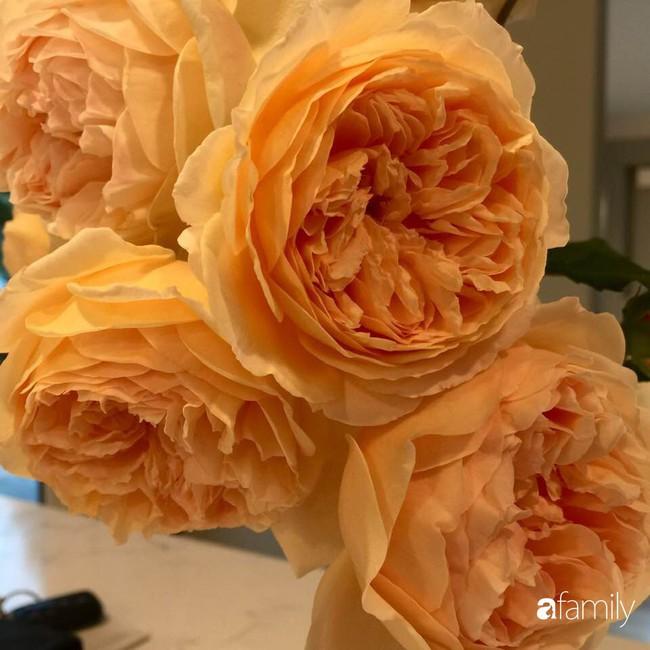 Vườn hồng đầy hoa và nắng của người phụ nữ Việt yêu thích trồng hồng ở Mỹ - Ảnh 6.