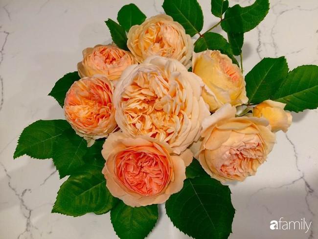 Vườn hồng đầy hoa và nắng của người phụ nữ Việt yêu thích trồng hồng ở Mỹ - Ảnh 5.