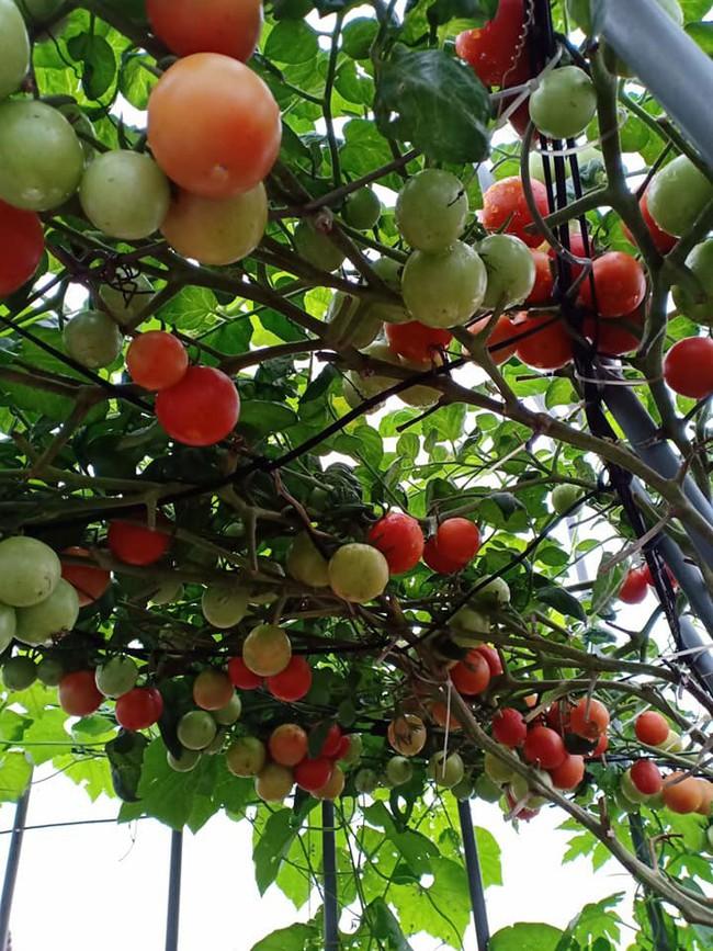 Bà mẹ Hà Nội với đam mê trồng đủ loại dưa sai quả trên sân thượng nhỏ hẹp - Ảnh 20.