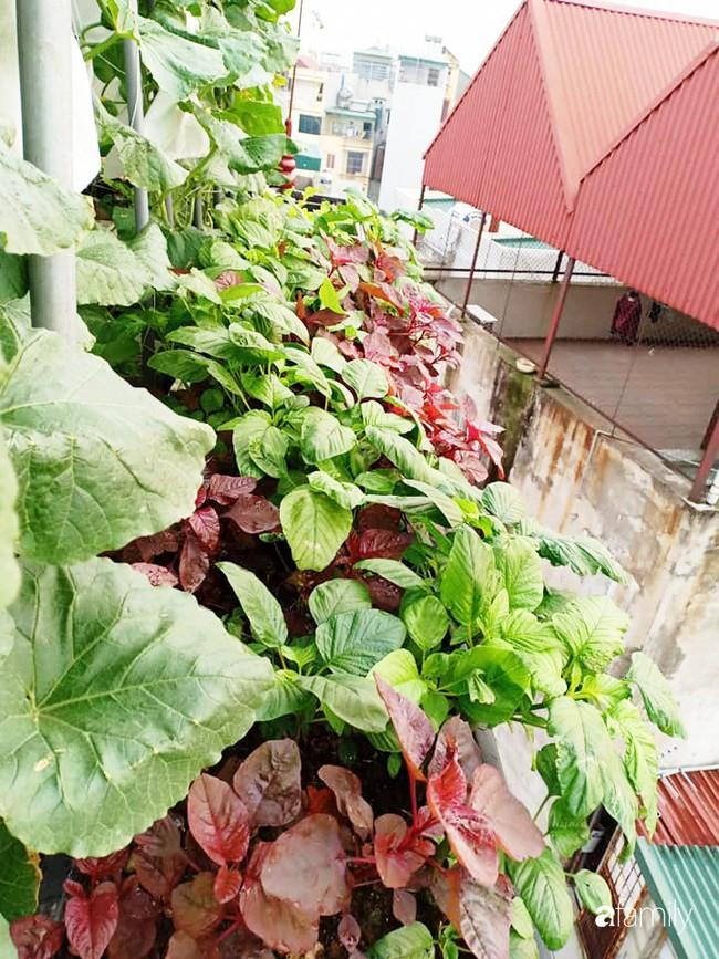 Bà mẹ Hà Nội với đam mê trồng đủ loại dưa sai quả trên sân thượng nhỏ hẹp - Ảnh 17.