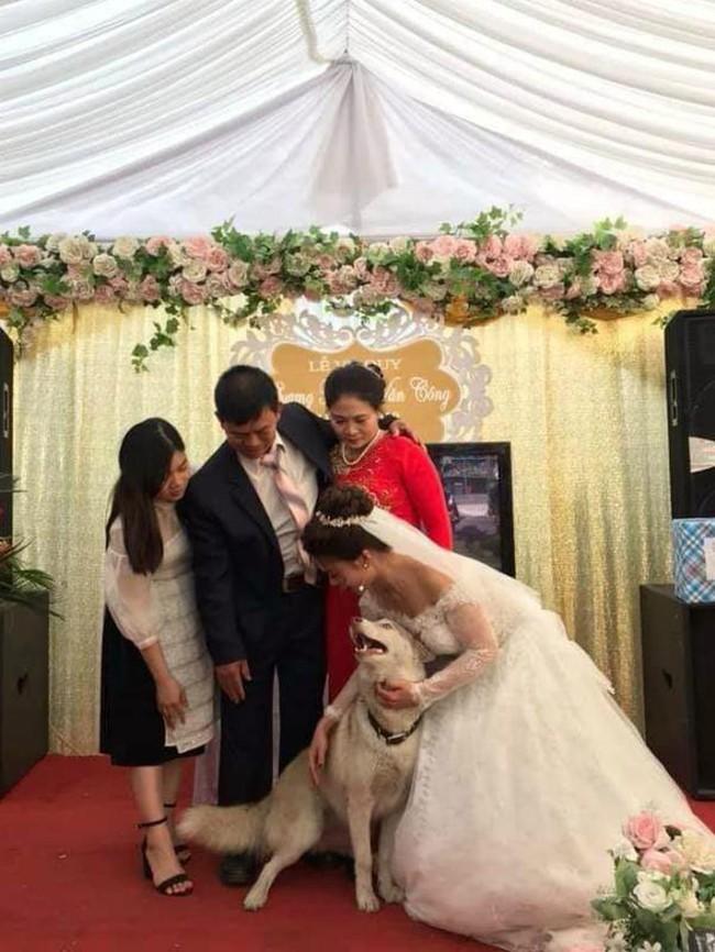 Tấm hình hài nhất đám cưới nhà người ta: Cô dâu lao ra đường, lôi bằng được chó cưng về chụp ảnh cùng! - Ảnh 5.