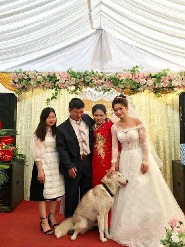 Tấm hình hài nhất đám cưới nhà người ta: Cô dâu lao ra đường, lôi bằng được chó cưng về chụp ảnh cùng! - Ảnh 6.