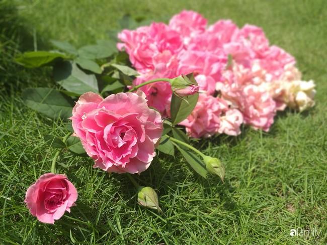 Khu vườn hoa hồng ngọt ngào mang chút hoài niệm của cặp vợ chồng cùng dành thời gian chăm chút ở An Giang - Ảnh 2.