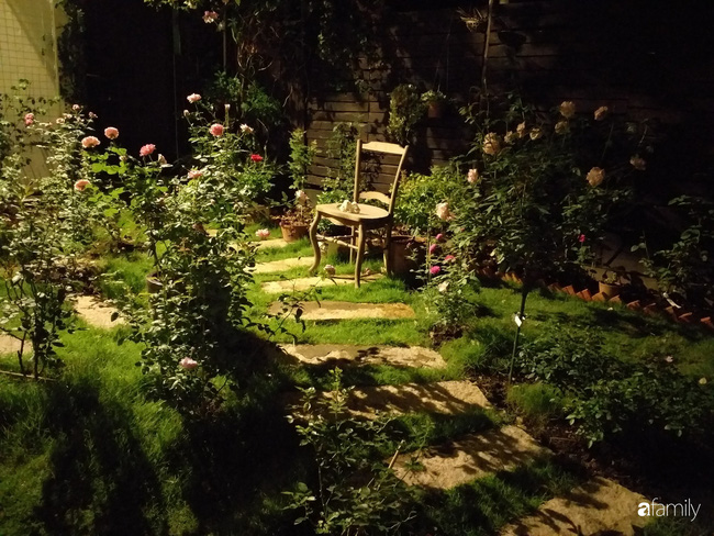 Khu vườn hoa hồng ngọt ngào mang chút hoài niệm của cặp vợ chồng cùng dành thời gian chăm chút ở An Giang - Ảnh 1.