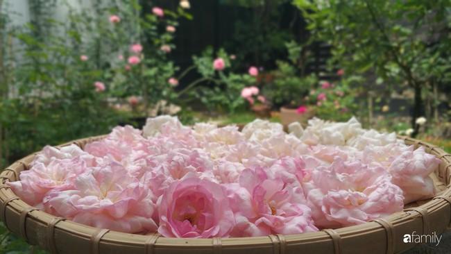 Khu vườn hoa hồng ngọt ngào mang chút hoài niệm của cặp vợ chồng cùng dành thời gian chăm chút ở An Giang - Ảnh 8.