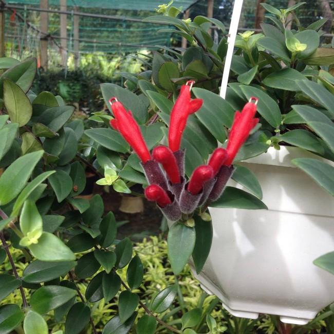 Chọn đúng loại thực vật may mắn bày nơi làm việc và tại nhà sẽ giúp công việc thuận buồm hanh thông, tiền tài chảy về đầy túi.  - Ảnh 6.