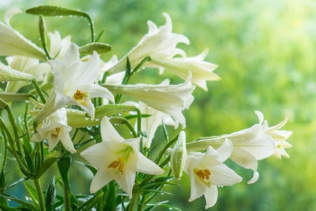 Chọn đúng loại thực vật may mắn bày nơi làm việc và tại nhà sẽ giúp công việc thuận buồm hanh thông, tiền tài chảy về đầy túi.  - Ảnh 1.