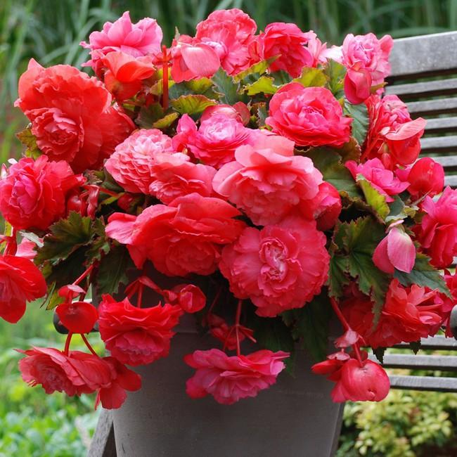 Chọn đúng loại thực vật may mắn bày nơi làm việc và tại nhà sẽ giúp công việc thuận buồm hanh thông, tiền tài chảy về đầy túi.  - Ảnh 9.