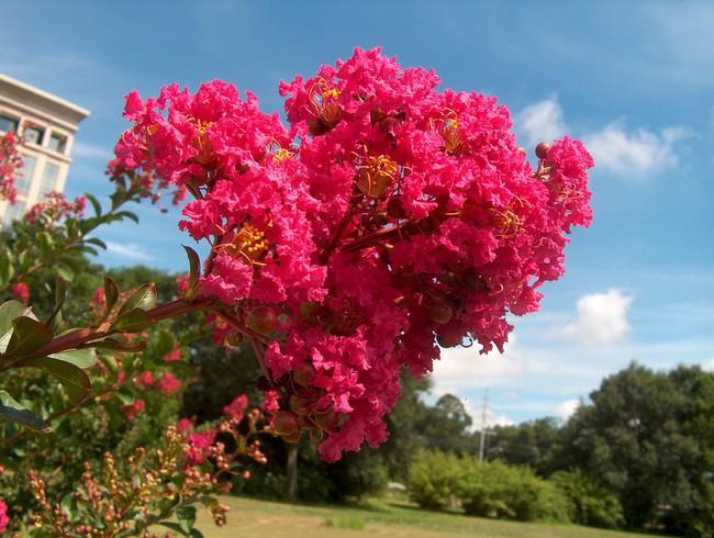 Chọn đúng loại thực vật may mắn bày nơi làm việc và tại nhà sẽ giúp công việc thuận buồm hanh thông, tiền tài chảy về đầy túi.  - Ảnh 4.