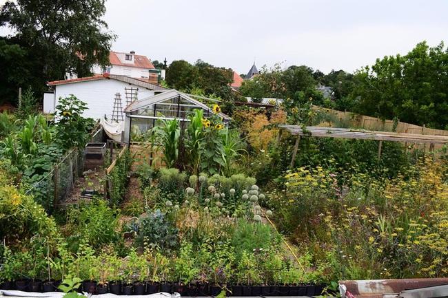 Khu vườn rau quả sạch chen chúc nhau tốt tươi của người đàn ông từ nhỏ đã mơ ước trở thành nông dân - Ảnh 8.