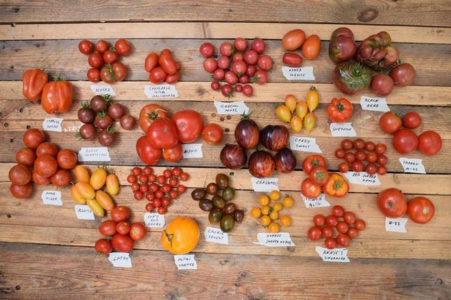 Khu vườn rau quả sạch chen chúc nhau tốt tươi của người đàn ông từ nhỏ đã mơ ước trở thành nông dân - Ảnh 13.