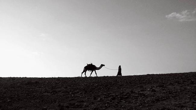 Câu chuyện lạc đà đi xuyên sa mạc không cần ăn uống và bài học đáng giá dành cho chị em công sở - Ảnh 3.
