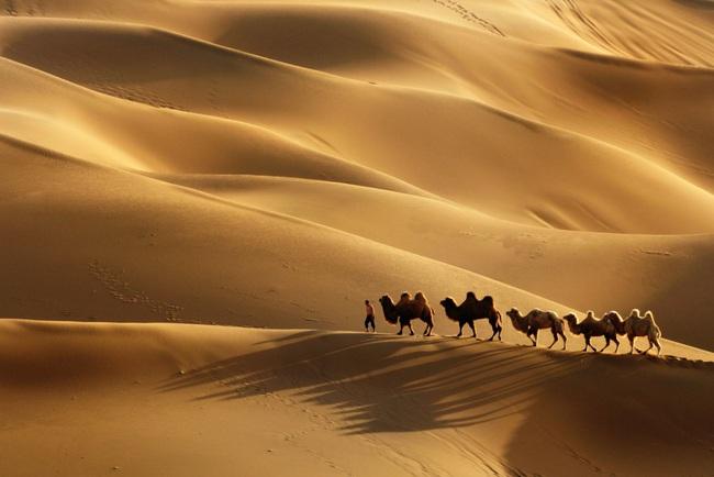 Câu chuyện lạc đà đi xuyên sa mạc không cần ăn uống và bài học đáng giá dành cho chị em công sở - Ảnh 2.