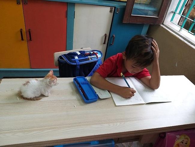 Phát hiện học sinh lớp 1 mang mèo đến lớp, cô giáo không phạt lại có hành động bất ngờ khiến cậu bé... thở phào - Ảnh 1.