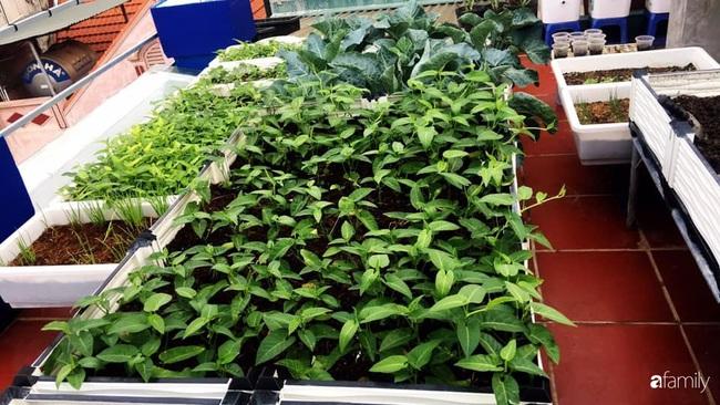 Sân thượng xanh mát đa dạng rau quả sạch cho bữa ăn thêm an tâm của mẹ hai con Hà Nội - Ảnh 14.