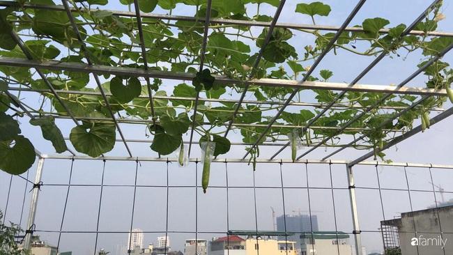 Sân thượng xanh mát đa dạng rau quả sạch cho bữa ăn thêm an tâm của mẹ hai con Hà Nội - Ảnh 6.