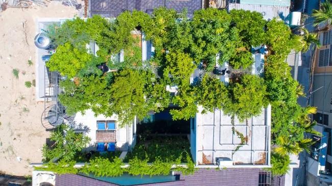 Ngôi nhà đầy gió tự nhiên, cây xanh và ánh sáng thân thiện với môi trường dành cho gia đình 5 người ở Đà Nẵng - Ảnh 2.