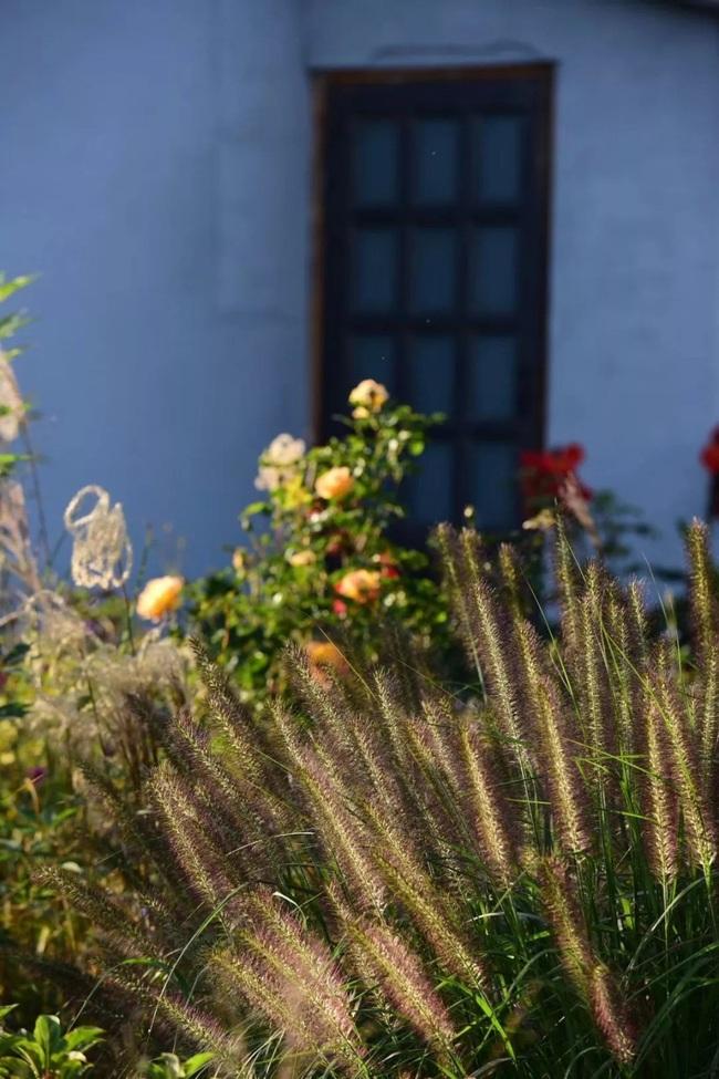 Cặp vợ chồng trẻ dành 5 năm để biến khu đất hoang rộng 6000m2 thành thiên đường của cỏ cây, hoa lá - Ảnh 6.