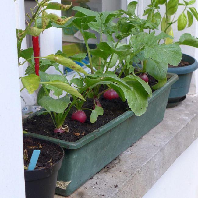 Tận dụng mảnh đất phía sau nhà, người đàn ông đảm đang trồng đủ loại thực phẩm sạch cho cả nhà thưởng thức - Ảnh 15.
