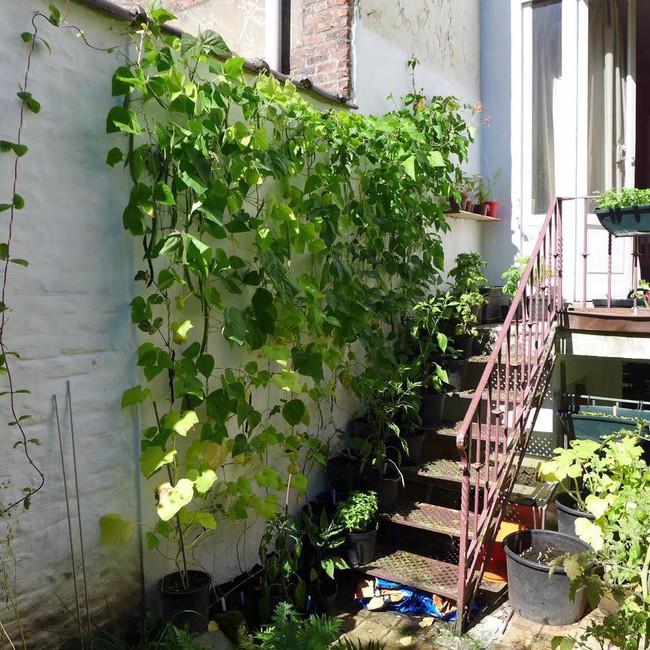 Tận dụng mảnh đất phía sau nhà, người đàn ông đảm đang trồng đủ loại thực phẩm sạch cho cả nhà thưởng thức - Ảnh 13.